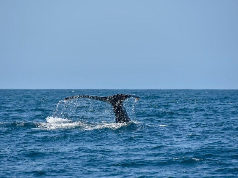 A whale in Los Cabos