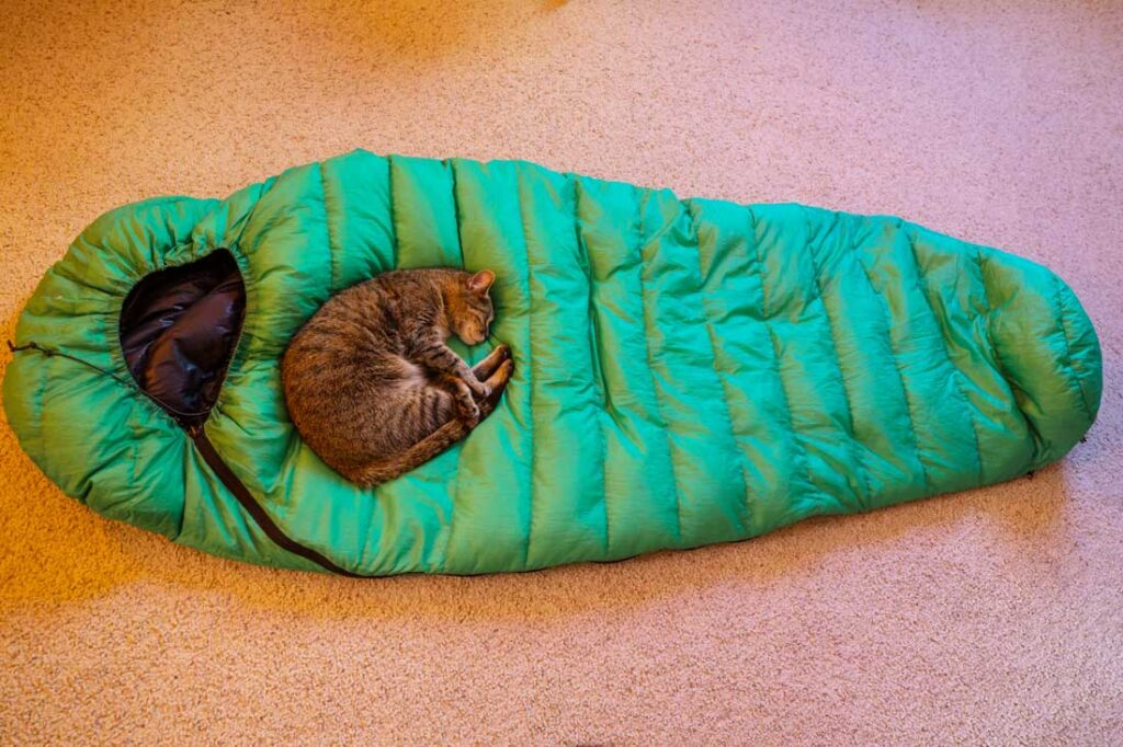 Cat curled up in sleeping bag