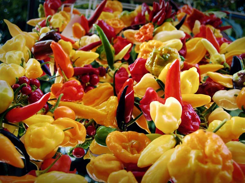Mexican chilli peppers for sale in Merida, Mexico. Is Merida Worth Visiting?