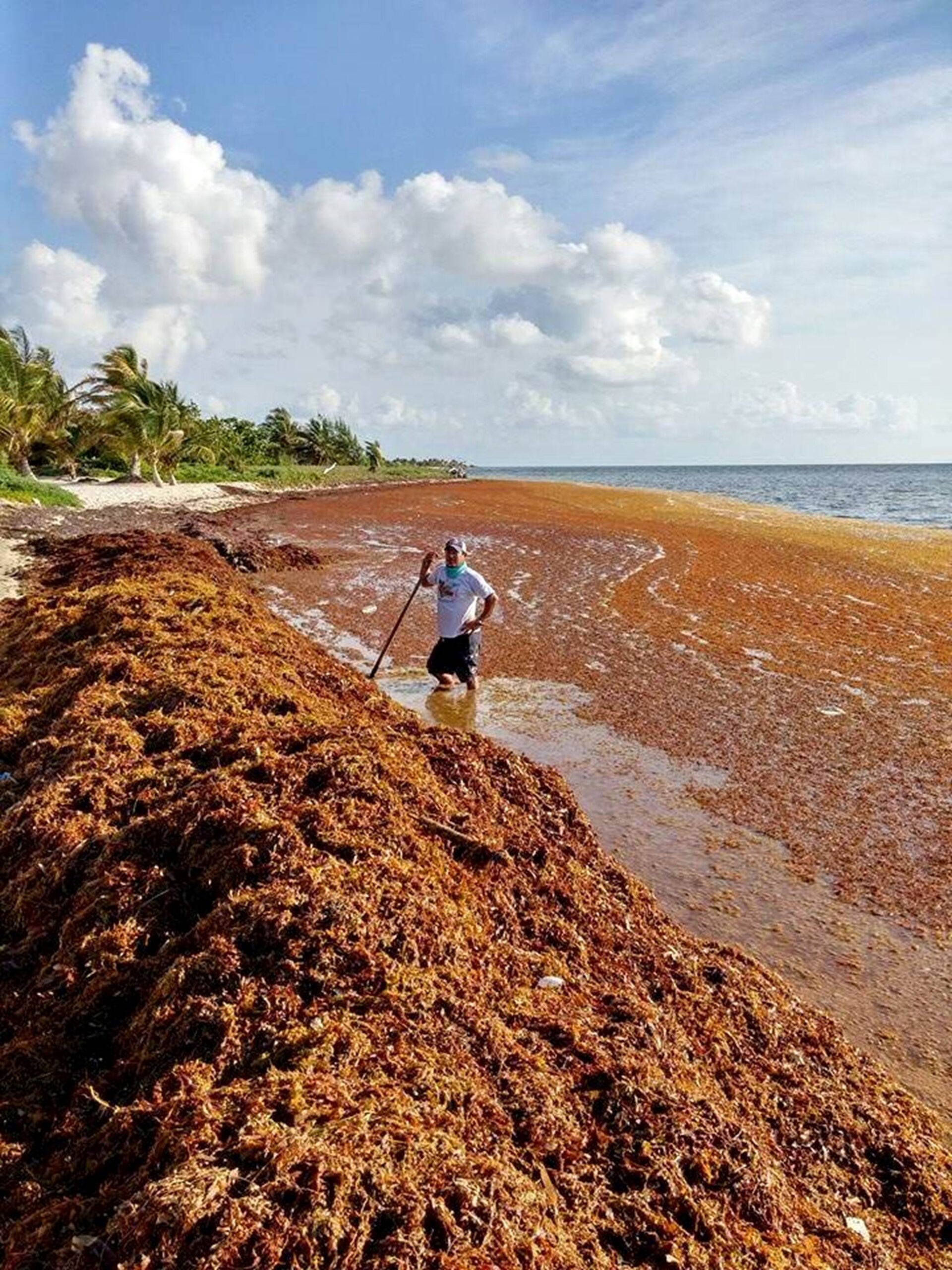 Seaweed Invasion on Mexican beaches