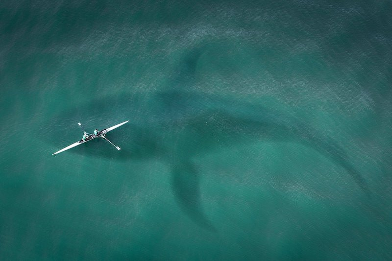 shark from above