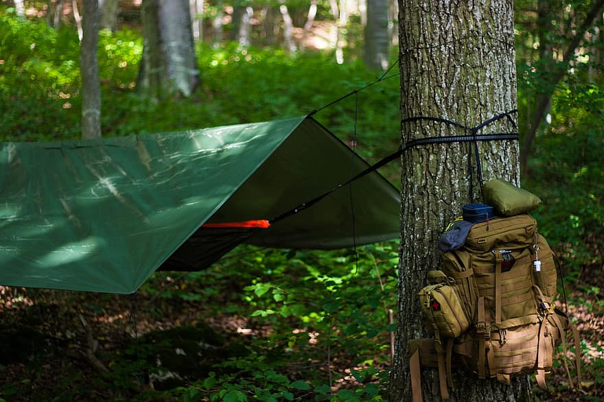 Camping in the Northern Wasatch Forest