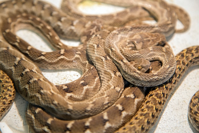 Most Dangerous Animals in Michigan: 7 Deadly Killers