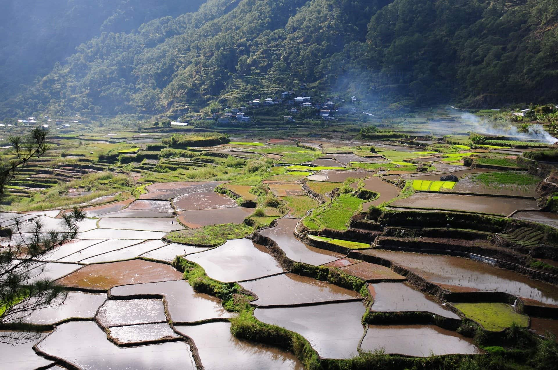Green, steamy rice paddy landscape in Asia
