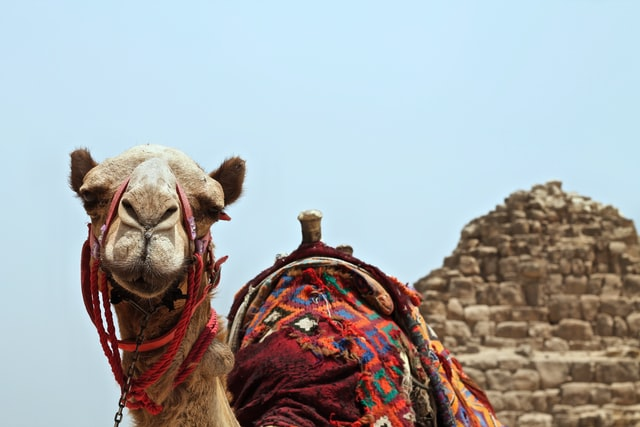Camel ride - 8-day Egypt itinerary