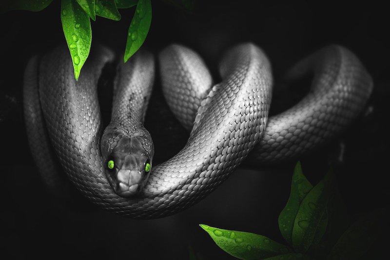 dangerous snakes in turkey