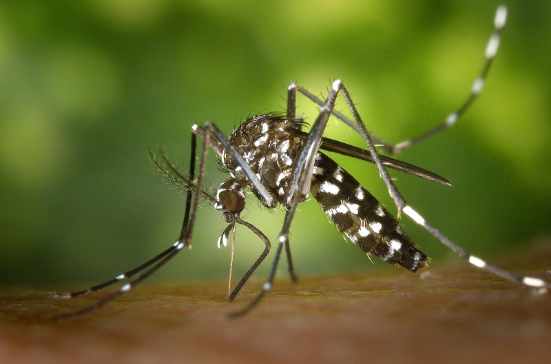 Tiger Mosquito - the most dangerous animal in China?