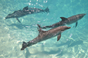 Three Dolphins in Cancun